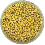 Kent Particles Maize